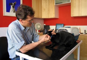 Veterinarian with cat client