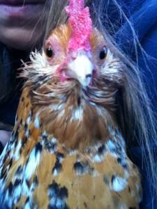 Fleur the Chicken close up