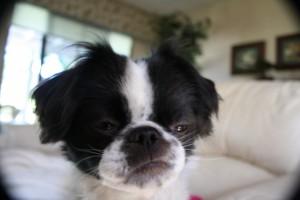 Ollie the dog 2